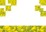Flower02_b.png